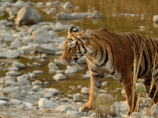 Jim Corbett - Corbett National Park